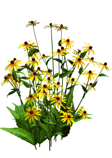 bunch of black eyed susan flowers